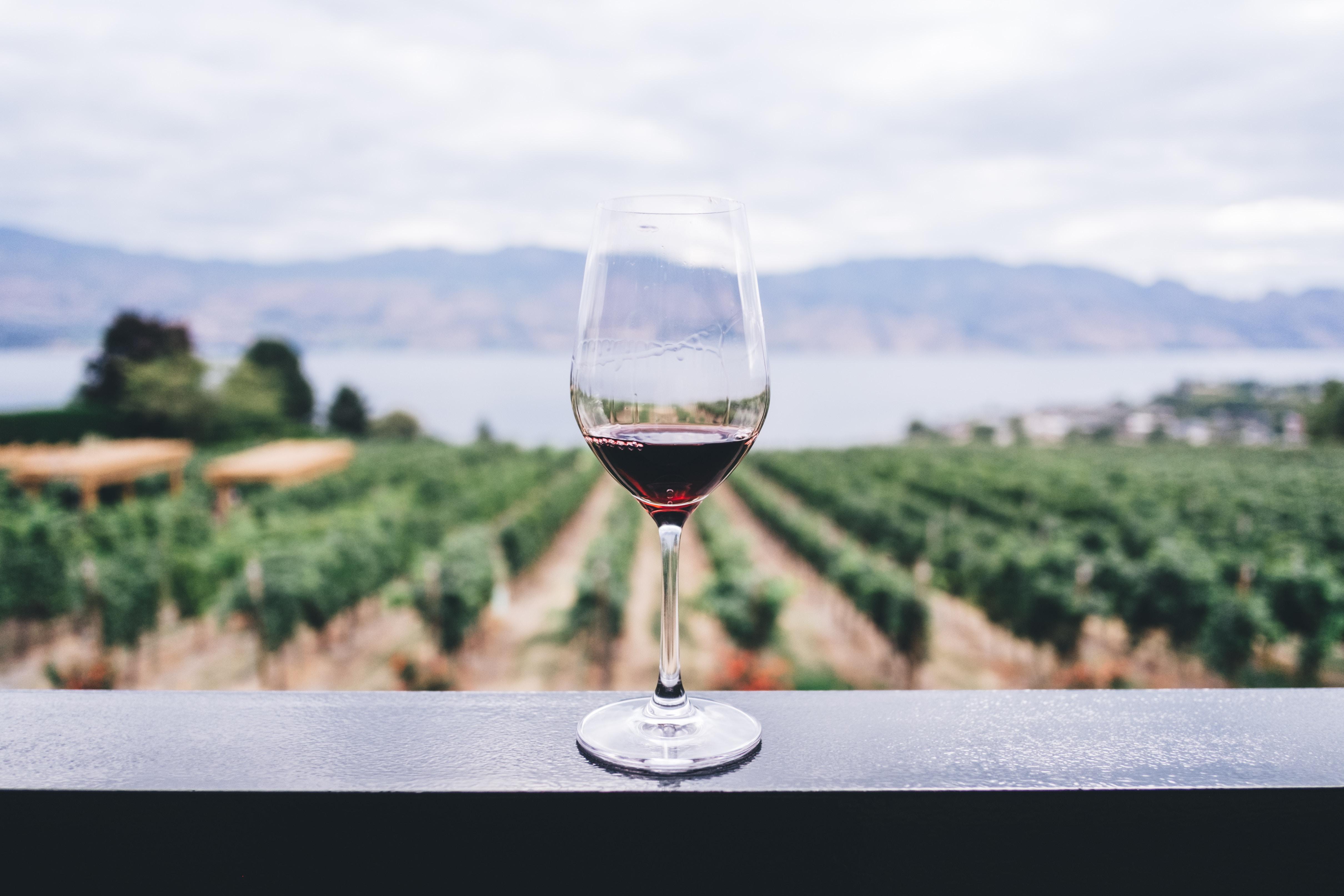 Etat de la production mondiale du vin