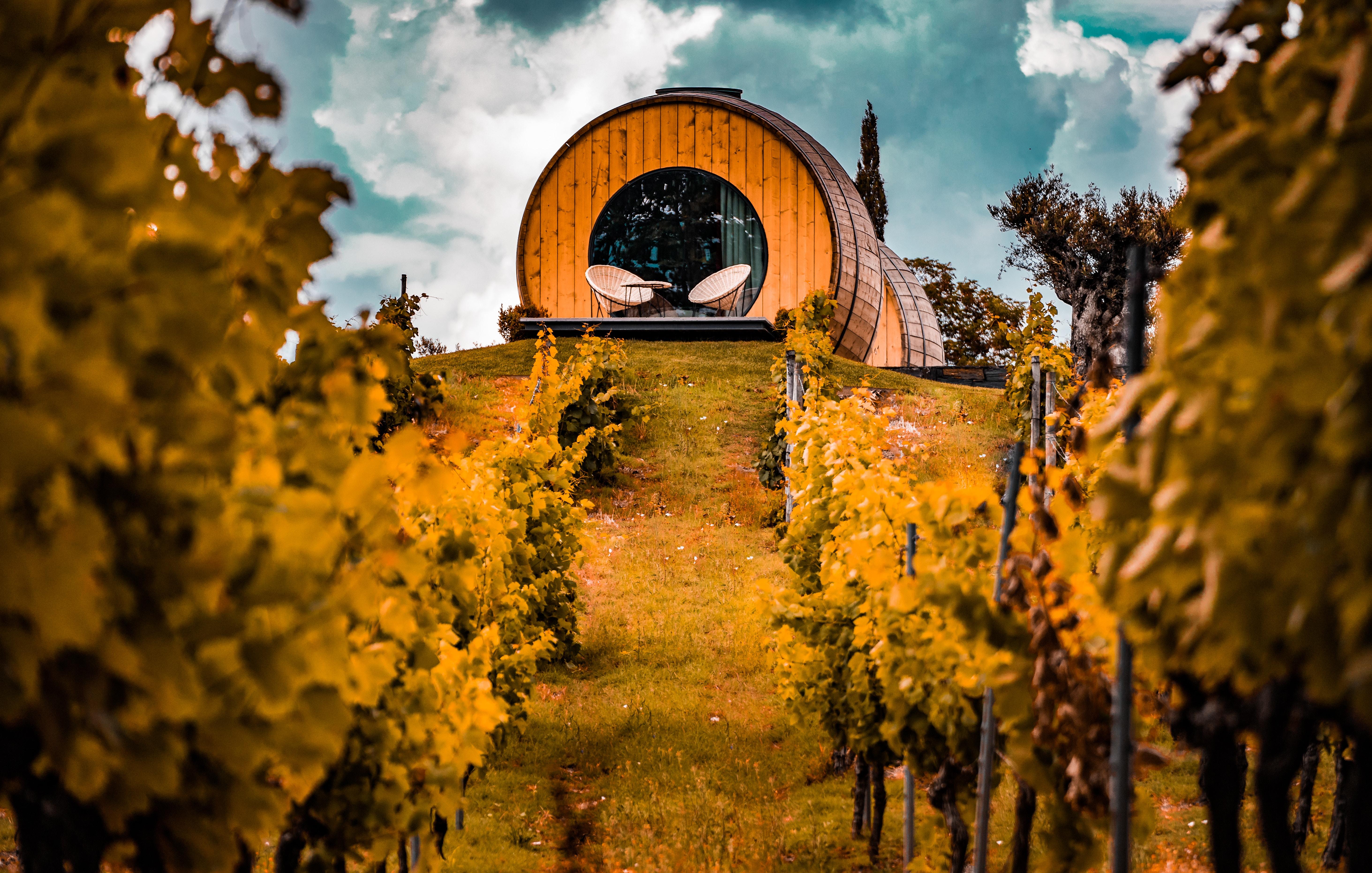 La vigne, le vignoble
